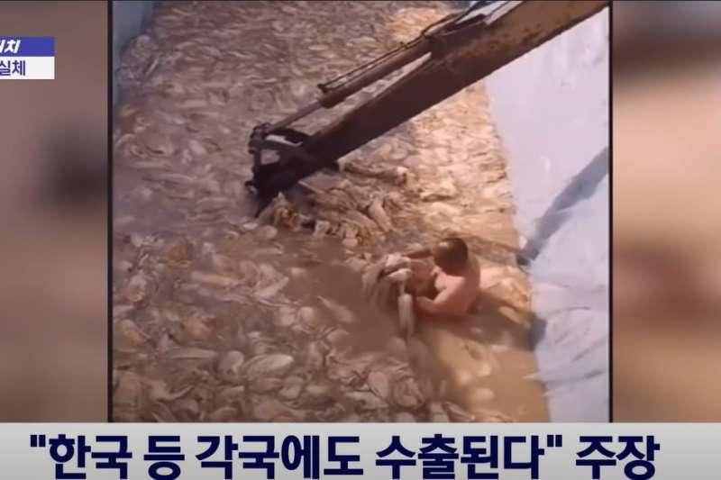 近日在韓網傳出中國業者踩踏泡菜的影片,讓網友發起「拒吃運動」。(圖/擷取自Youtube)