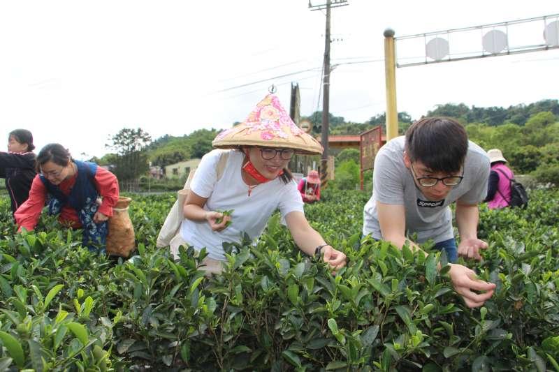 透過採茶體驗,深度了解客家文化,開心的笑容千金難買。(圖/新北市客家局提供)