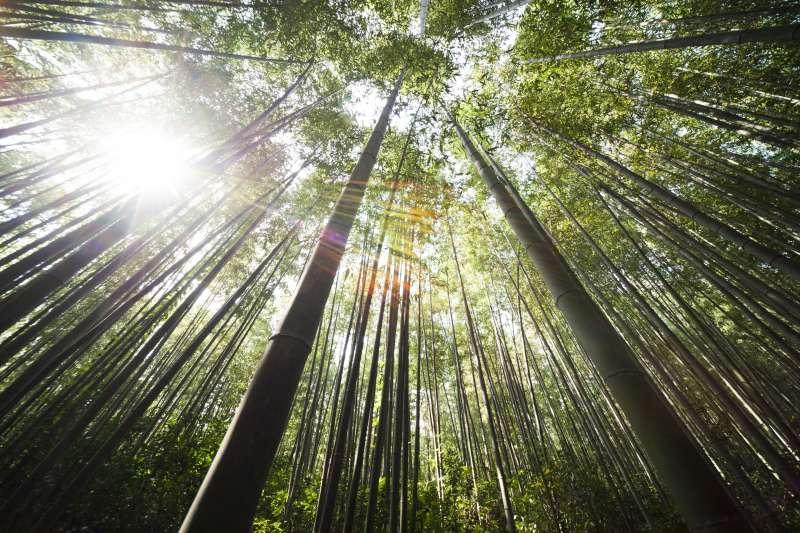 中國竹刻為一門傲世的獨門藝術,而周顥在嘉定竹刻領域「首屈一指」的地位與「竹刻少陵」的造詣,同是何等崇高與精深。(圖/pixabay)