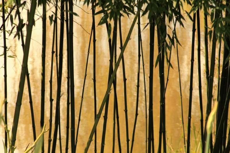 作者認為,周顥的鐵筆在中國竹雕藝術史上,委實雕出了一章「前無古人、後無來者」的新頁。(圖/Pexels)