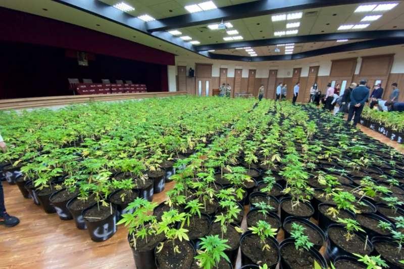 法務部調查局於新竹縣關西鎮山區破獲一大麻工廠,查獲國內大麻植株最高紀錄。(法務部調查局提供)