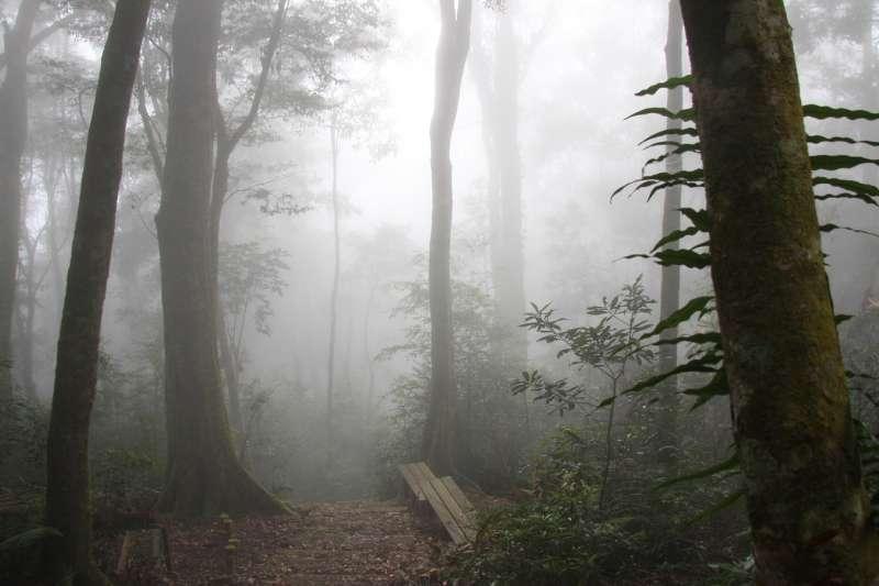 藤枝國家森林遊樂區「小溪頭」之稱,但受到莫拉克颱風重創關園近10年,5/7將正式營運。(圖/屏東林管處提供)