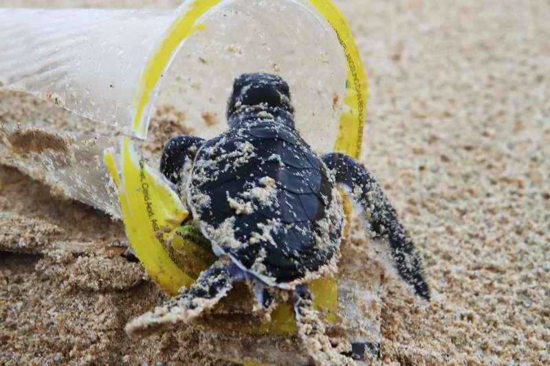 台灣在2018年宣布全面禁用1次性塑膠製品,但至今整體塑膠用量不減反增,光是2020年1次性飲料杯用量就將近20億個。示意圖。(綠色和平提供)