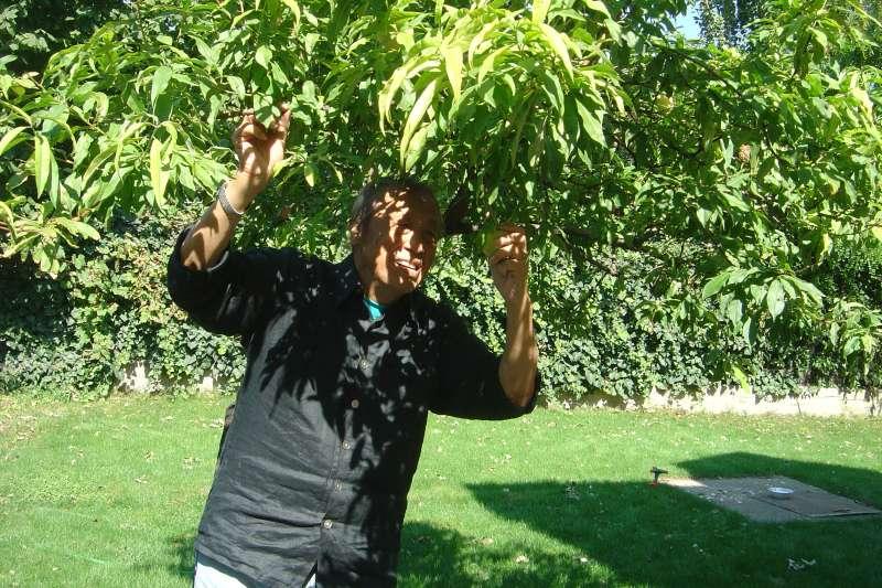 看到我家的杏樹。(張桂越提供)