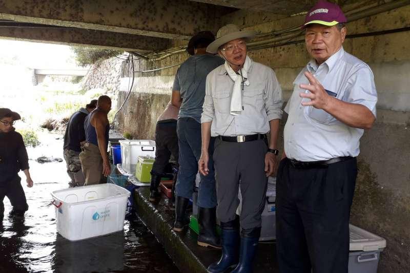 台中市府農業局救援台灣稀有保育類-台灣白魚。(圖/台中市政府)