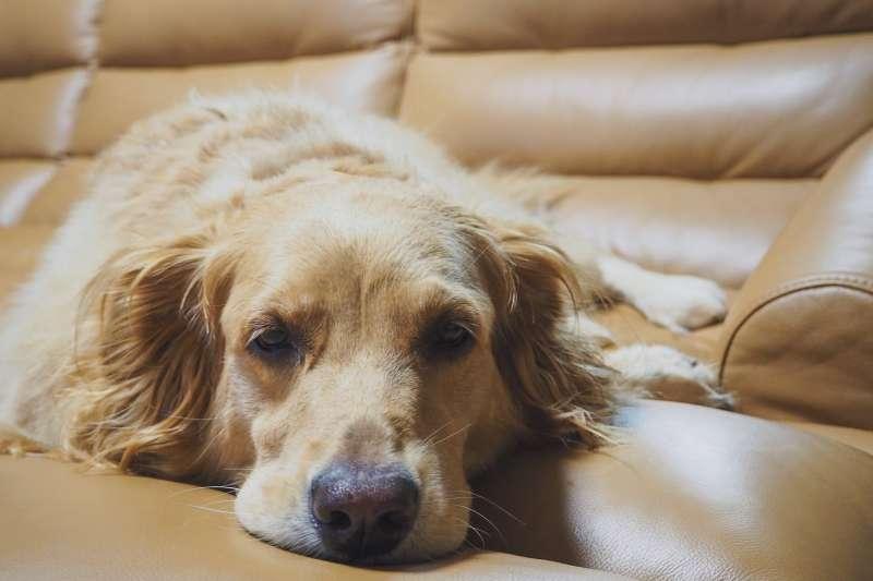 累得跟狗一樣,該怎麼用英文表達呢?(圖/取自Pexels)