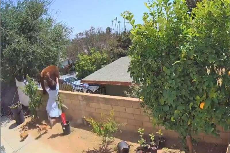 美國加州一名17歲少女為保護愛犬,情急之下徒手把牆上的熊推了下去。(圖/翻攝自Instagram@bakedlikepie)