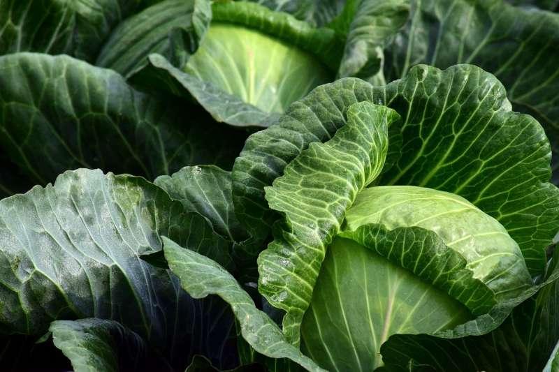 疫情期間避免出門,穩定、安心的蔬菜來源變得十分重要(ulleo@pixabay)