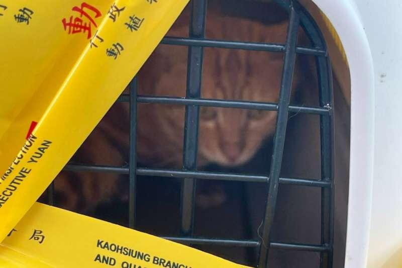 20210610-海巡署南部分署所屬第11岸巡隊興達安檢所,9日中午查獲1艘載有25公斤冷凍鮑魚,及活體美國短毛貓一隻的馬公籍漁船。(海巡署南部分署提供)