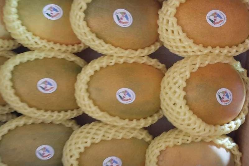 台東夏雪芒果外銷亮眼產季,可望銷售達超過10公噸以上 。(圖/台東縣政府提供)