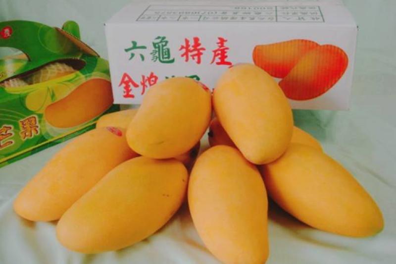 六月進入高雄金煌芒果的產期,表皮金黃、果實碩大的金煌芒果,不僅果肉飽滿多汁、口感也相當細緻滑順,是高雄自豪的在地優質特色水果。(圖/高雄市農業局提供)