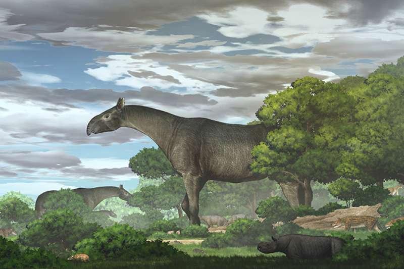 距今2千多萬年前生活在青藏高原的古生物「臨夏巨犀」。(取自中國科學院官網)