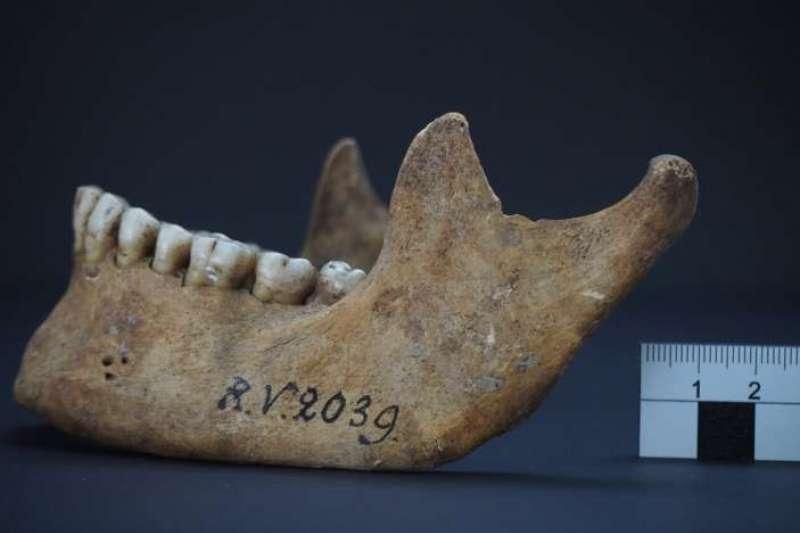 5千多年前,歐洲拉脫維亞一名男性狩獵採集者遺骸含有導致鼠疫的細菌DNA片段及蛋白質(取自www.cell.com)