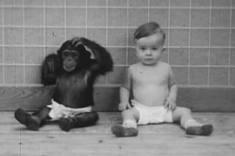 心理學家溫思羅普•凱洛格認為黑猩猩若從小接受人類撫養、教導,便能夠脫離原始野性,成為真正的人類,於是他展開了一場瘋狂的實驗。(圖/擷取自youtube)