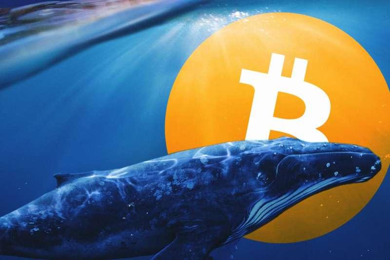 鯨魚一詞在比特幣市場中,代表持有1百枚至1萬枚的比特幣大戶。(圖/李可人提供)