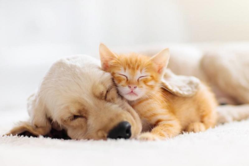 寵物保險企業Anicom損害保險公司的調查顯示,在2020年間,主人花在寵物狗上的錢達到了寵物貓的兩倍以上。(示意圖/pixta)