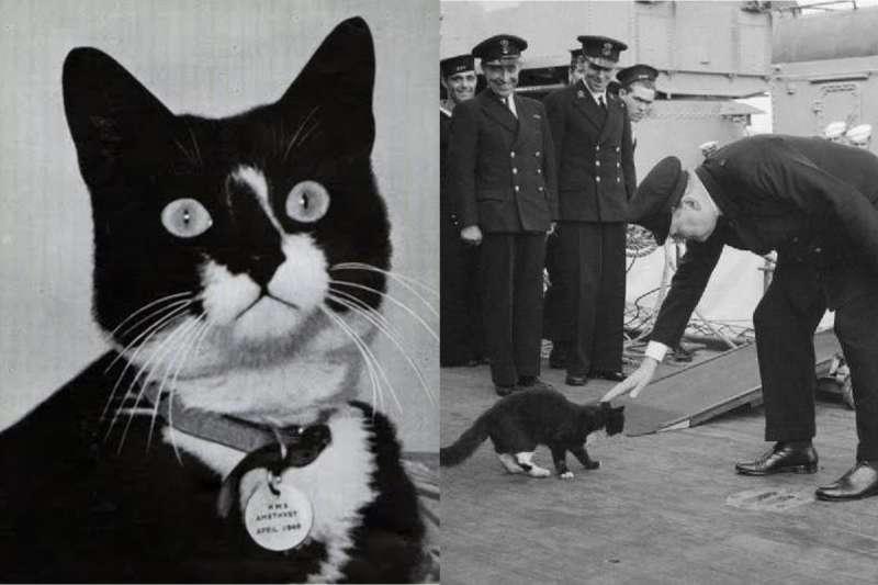 二戰時,一隻「貓艦員」被稱為「不沈的山姆(Unsinkable Sam)」,前後待過五艘英德戰艦都被擊沈,傳奇的一生讓牠聲名大噪。(合成圖/取自youtube、維基百科)