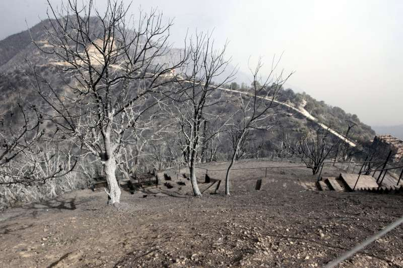 8月10日,阿爾及利亞提濟烏祖的山區發生野火,樹木遭到焚毀(美聯社)