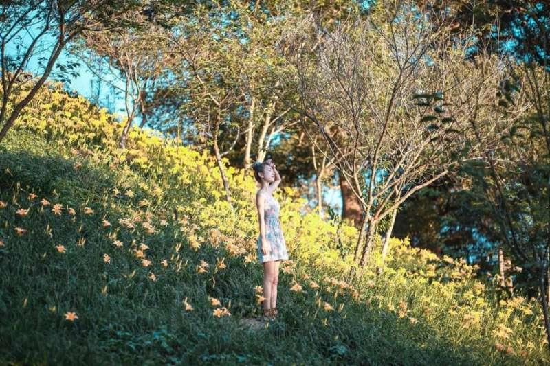 金針花海景點-梅山橫山屏休閒園區。(圖/tripbaa趣吧提供)