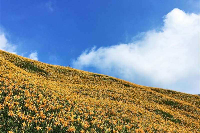 金針花海景點-台東太麻里金針花季。(圖/tripbaa趣吧提供)