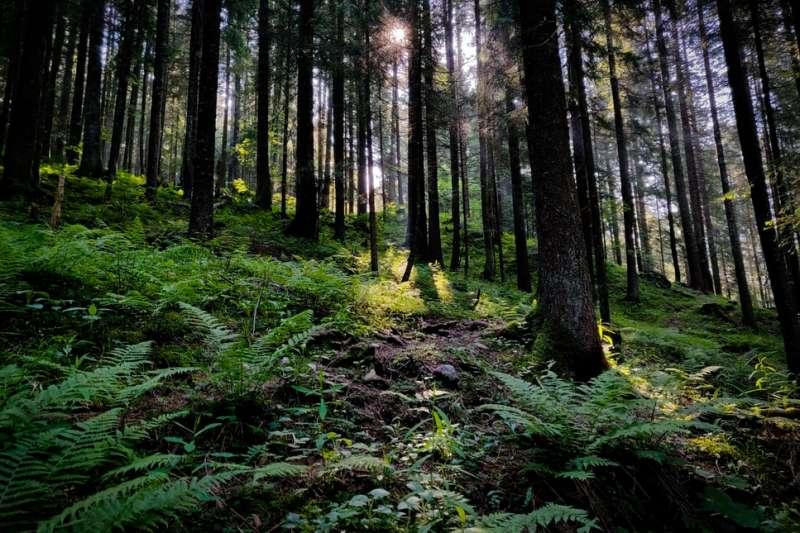 碳匯(carbon sink)是儲存二氧化碳的天然或人工「倉庫」,而地球最會儲存二氧化碳的天然倉庫就是森林。(圖/取自Unsplash)
