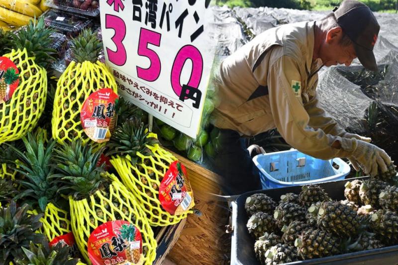 鳳梨在日本與台灣移民的關係深厚(圖片來源:作者拍攝)