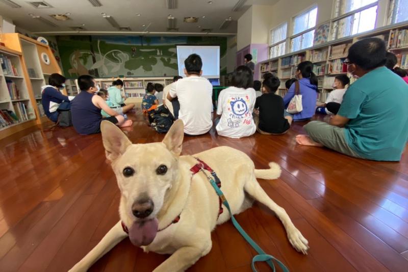毛孩書僮原本是收容所裡的流浪犬,經動保處挑選訓練成為超萌伴讀書僮。(圖/ 動保處提供)