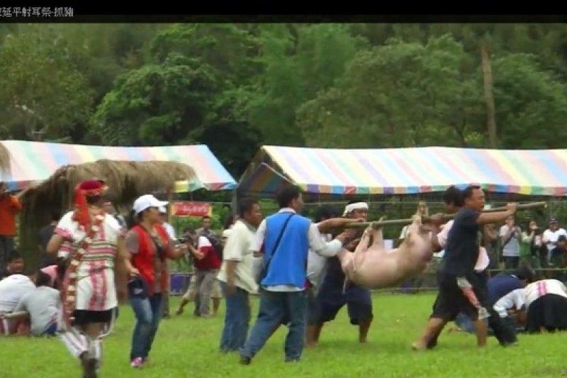 布農族射耳祭的抓豬儀式引發虐待動物爭議,但政院長江宜樺認為應以多元文化角度看待。(取自網路)