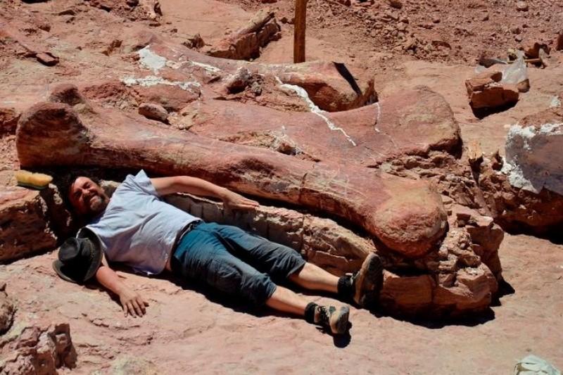 阿根廷農夫發現的恐龍化石,很多長度超過一般人身高。(取自博物館官網)