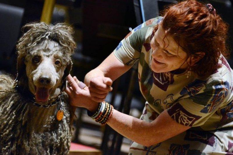 美國匹茲堡交響樂團演出,請來狗狗吠聲吠影。(取自網路)