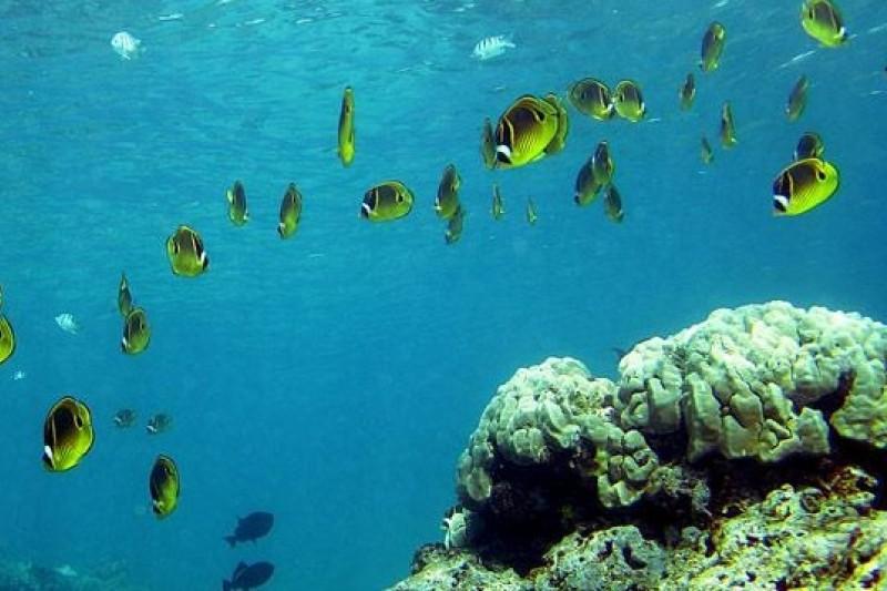 近期多份海洋研究報告指出,海洋現況已逼近類似「生態滅絕」的境地(取自網路)