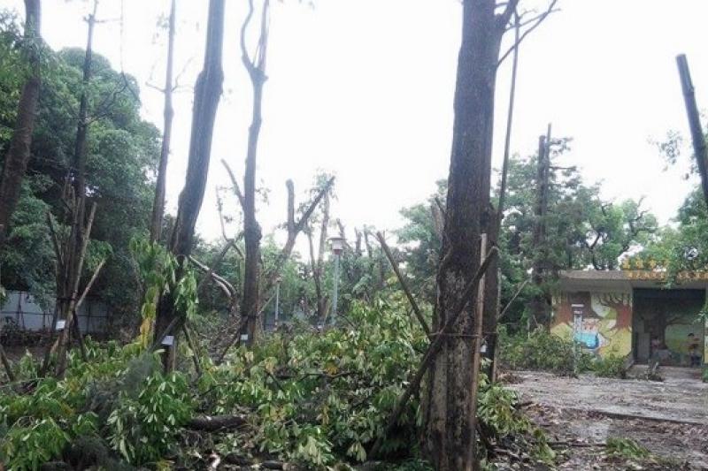 高雄中央公園部分樹木在氣爆後,遭市府偷偷違法施工,「令人氣憤」。(中央公園護樹護地聯盟提供)