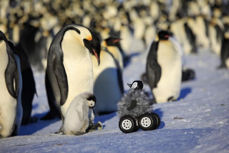 皇帝企鵝與機器企鵝。(美聯社)