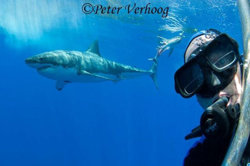 范霍格與鯊魚的自拍照。(取自官網)