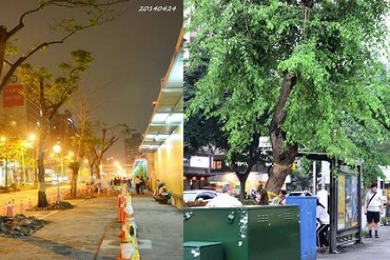 松菸護樹行動聯盟在光復南路駐點,反對為了大巨蛋拓寬道路移樹,台北市政府則於日前寄出勸導單,要求護樹盟15日6點前拆除。(取自松菸護樹行動聯盟)
