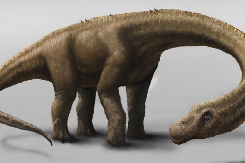 體重將近60公噸、身長大約26公尺的許蘭氏無畏龍(美聯社)