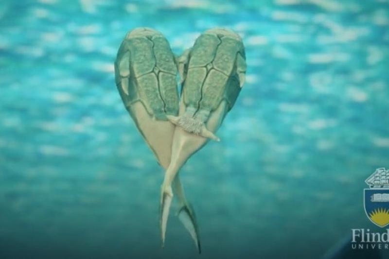 古生物學家發現最早透過性交生育的原始魚,生活於3.8億年前(Flinders University)