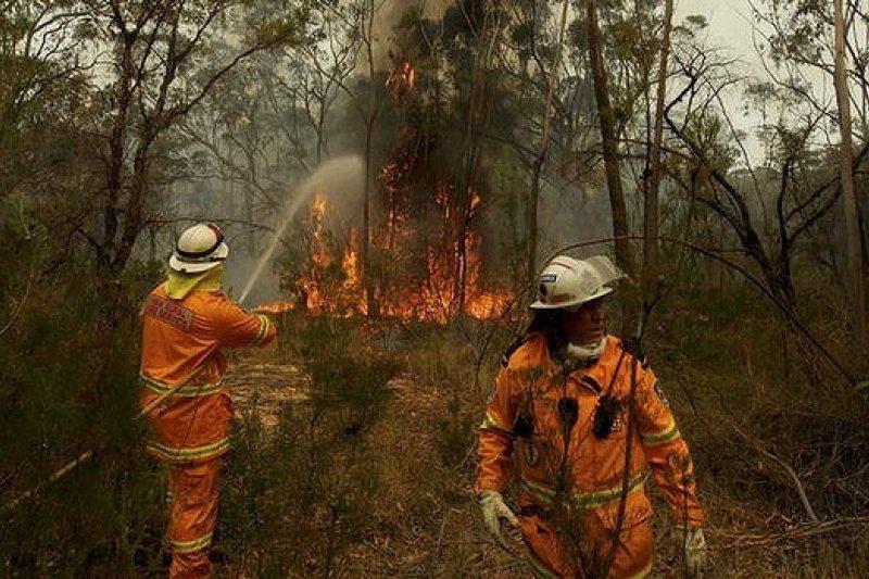 澳洲新南威爾斯省近來爆發數十起野火,火勢之嚴重是45年未見(取自網路)
