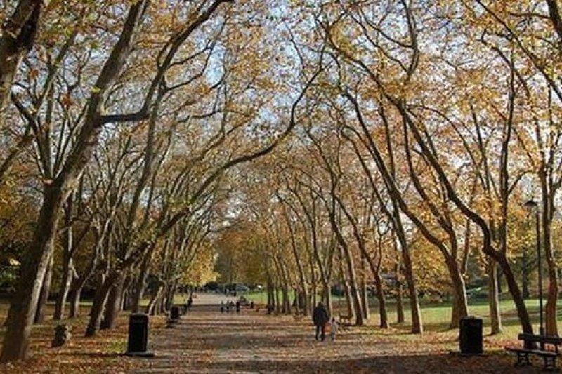 英國一項研究顯示,人們處於綠地較多的環境中,身心狀況較佳。(取自網路)