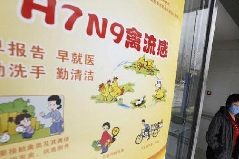 中國H7N9疫情再度升溫。(取自網路)