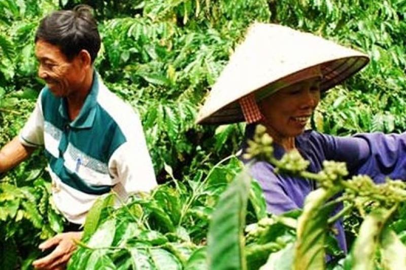 全球第二大咖啡出口國如今是盛產羅布斯塔咖啡豆的越南(取自網路)