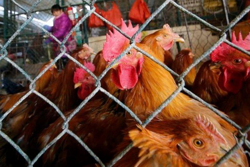 上海一處活禽市場。(美聯社)