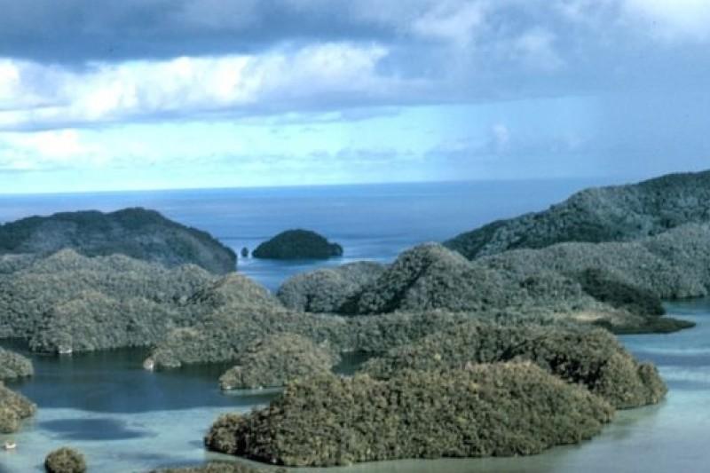 我國位於太平洋的邦交國帛琉將逐步禁止商業捕魚,成立海洋保育區。(維基百科)