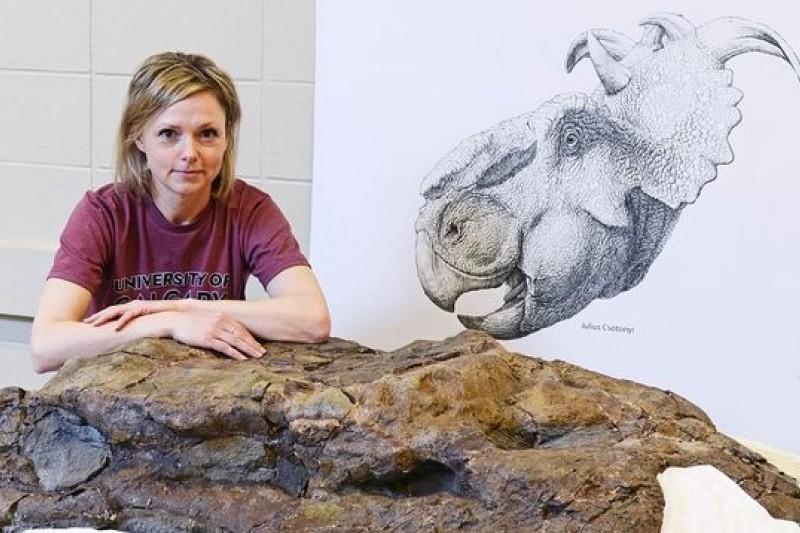 加拿大卡加立大學古生物學家柴倫尼斯基與她發現的厚鼻龍頭蓋骨化石。(卡加立大學)