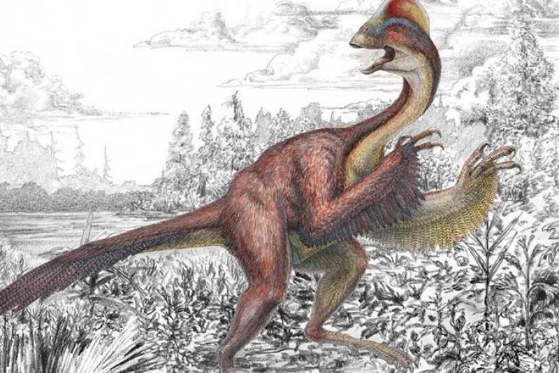 安朱瓦里耶的出現,再度提示了另一條研究進路:恐龍沒有滅絕,只是演化成鳥類(取自網路)
