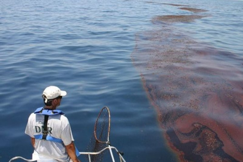 4年前的BP漏油事件造成莫西哥灣的生態大浩劫。(取自網路)