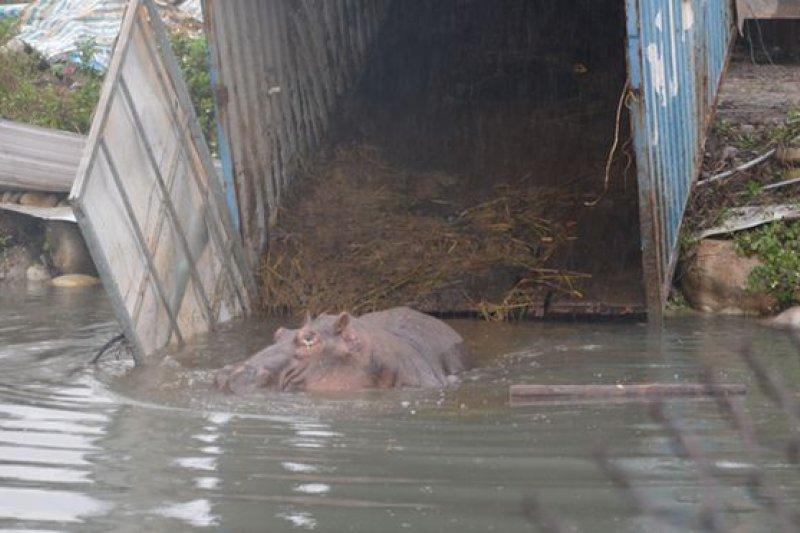 「阿河」重摔死,台中市農業局對天馬牧場開罰50萬。(取自台中市政府官網)