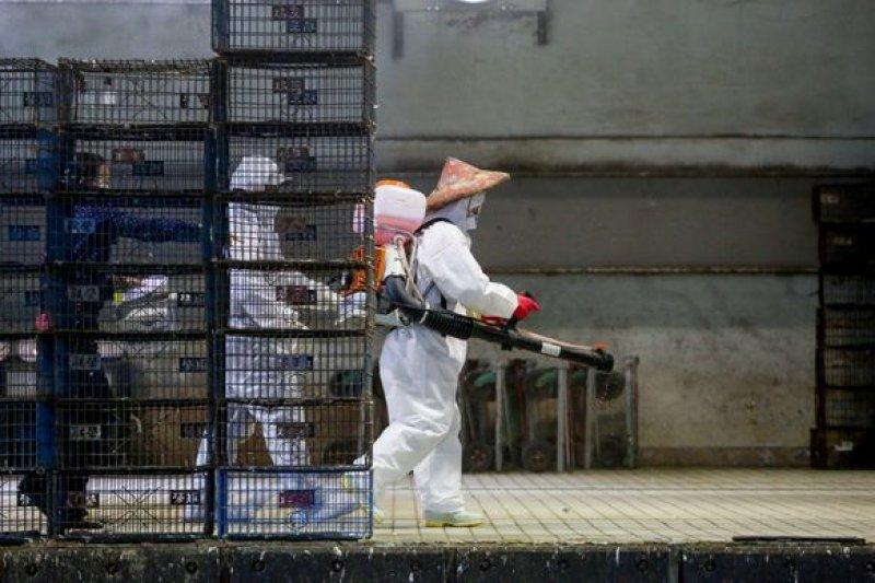 做不好先進的防疫措施,面對一波接一波的禽流感疫情,就只有無止境的過時的撲殺。(圖為家禽批發市場進行消毒/余志偉攝)