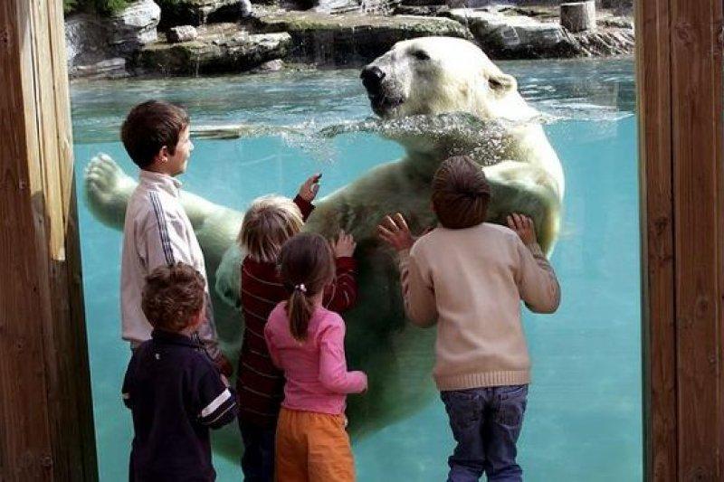 法國拉弗萊什動物園,讓北極態當你的室友!(取自臉書)