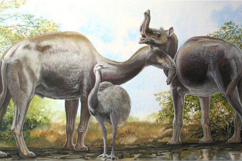 1萬年前滅絕的長頸駝,一直是生物學上最神祕的動物之一。(取自網路)